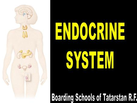 6/14/2016Mehmet KÖYLÜ2 ENDOCRINE SYSTEM Endocrine system helps to regulation and coordination of body activities. The endocrine system and nervous system.