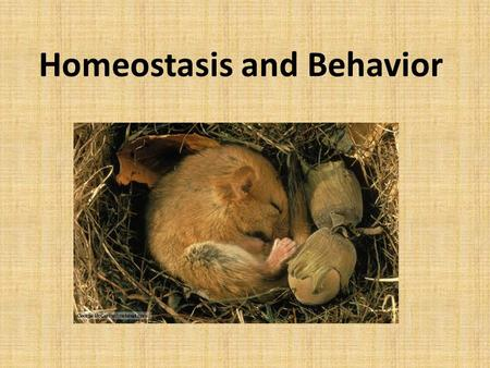 Homeostasis and Behavior