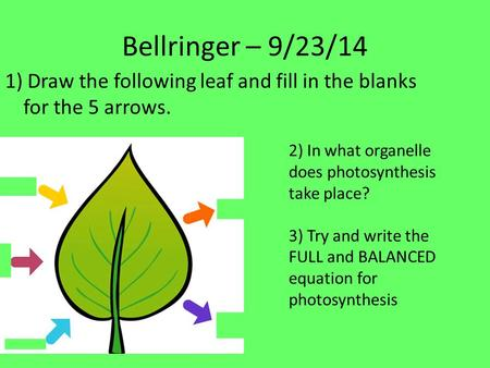 Bellringer – 9/23/14 1) Draw the following leaf and fill in the blanks for the 5 arrows. 2) In what organelle does photosynthesis take place? 3) Try and.