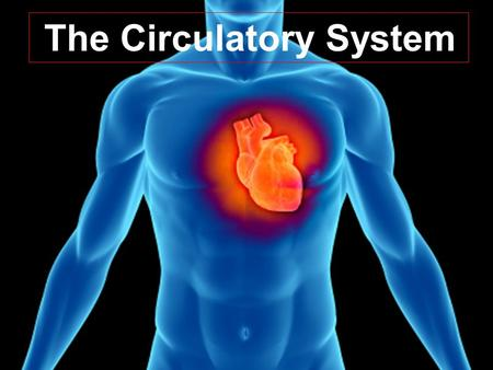 The Circulatory System. Circulatory System Also known as the Cardiovascular System Consists of:  Heart  Blood Vessels  Blood.