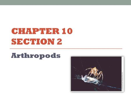 CHAPTER 10 SECTION 2 Arthropods. Characteristics of Arthropods Four major groups Crustaceans Arachnids Centipedes and Millipedes Insects Shared characteristics.