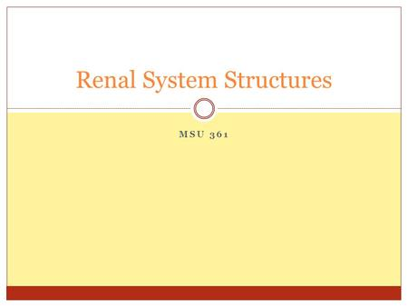 MSU 361 Renal System Structures. Functions of the Renal System Regulates water balance Regulates sodium, chloride, and potassium Produces hormones that.