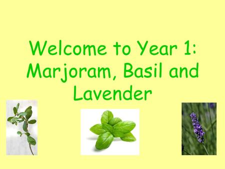 Welcome to Year 1: Marjoram, Basil and Lavender. Adults in our classrooms. Year 1 team will be Mrs Tallamy, Mrs Gartland, Mrs Battison, Mrs Stanton, Mrs.