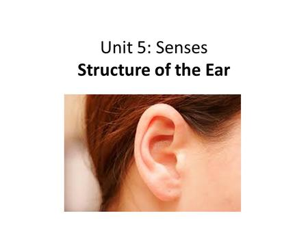Unit 5: Senses Structure of the Ear. Major functions of the ear 1.Hearing 2. Balance/Equilibrium *Sound waves and fluid movement act on receptors called.