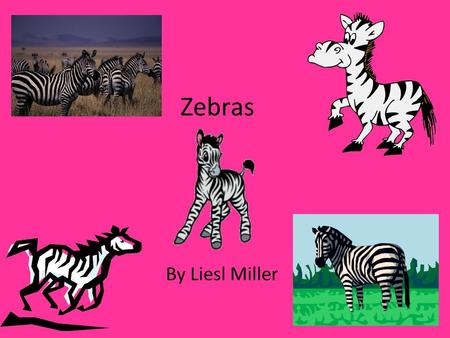 Zebras By Liesl Miller To reach the grass on the ground, zebras have long heads and necks. Yet, a zebra has only seven bones in its neck. The same number.