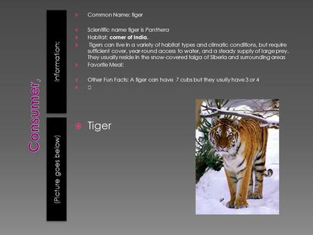 Information: (Picture goes below)  Common Name: tiger  Scientific name tiger is Panthera  Habitat: corner of India.  Tigers can live in a variety of.