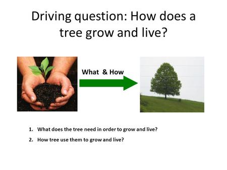 Driving question: How does a tree grow and live? What & How 1.What does the tree need in order to grow and live? 2.How tree use them to grow and live?