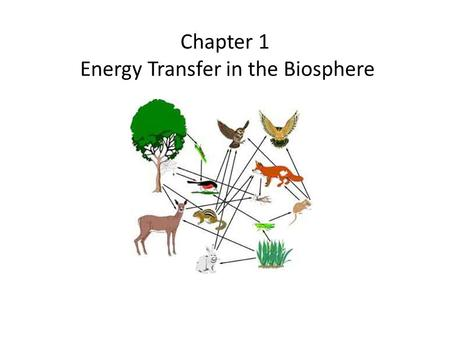 Chapter 1 Energy Transfer in the Biosphere. ENERGY AND THE BIOSPHERE Energy enters the biosphere by photosynthesis. For some organisms, energy enters.