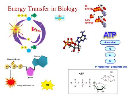 Energy Transfer in Biology. 1. The chemistry of life is organized into metabolic pathway Metabolism: an organisms chemical reactions. Metabolic pathways.