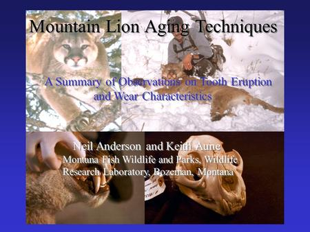 Mountain Lion Aging Techniques A Summary of Observations on Tooth Eruption and Wear Characteristics A Summary of Observations on Tooth Eruption and Wear.