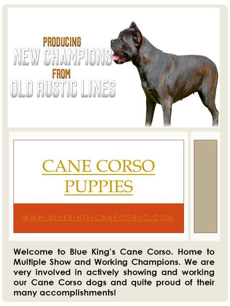 WWW.BLUEKINGSCANECORSO.COM CANE CORSO PUPPIES Welcome to Blue King's Cane Corso. Home to Multiple Show and Working Champions. We are very involved in actively.