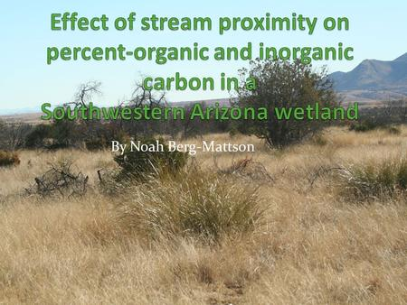 By Noah Berg-Mattson. Overview Ciénegas, or desert wetlands, provide crucial ecosystem services such as: Help maintain perennial stream flow Foraging.