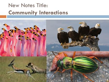 New Notes Title: Community Interactions. Do now 1/20  Name 1 of the 4 types of symbiosis.