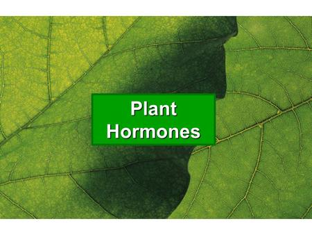 Plant Hormones. Overview Plant cells, like animal cells, respond to the actions of a variety of chemical signals, called hormones Just like animal hormones.