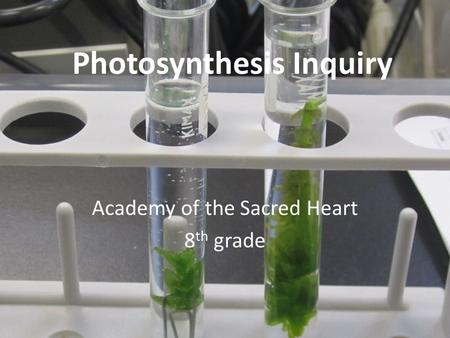 Photosynthesis Inquiry Academy of the Sacred Heart 8 th grade.