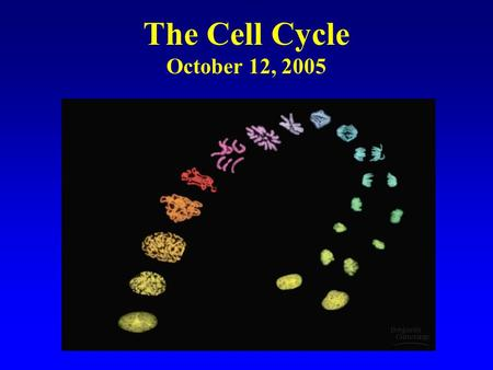 The Cell Cycle October 12, 2005. Cell Division Functions in Reproduction, Growth, and Repair.