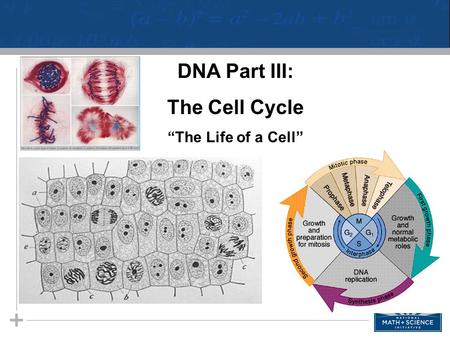 01 Introduction to Cell Respiration STUDENT HANDOUTS