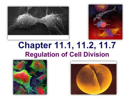 Chapter 11.1, 11.2, 11.7 Regulation of Cell Division.