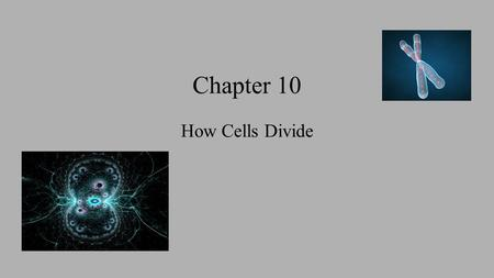 Chapter 10 How Cells Divide. 10.1 Prokaryotes vs Eukaryotes Prokaryotes divide by binary fission (simple dividing into two equal halves) DNA copy is made.