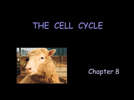 Chapter 8 THE CELL CYCLE. A. The Cell Cycle Events that occur in the life of a cell. Includes 3 major stages: F Interphase F Karyokinesis (mitosis) F.