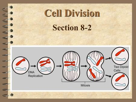 Cell Division Section 8-2. Objectives 4 Describe the events of binary fission Describe each phase of the cell cycle 4 Summarize the phases of mitosis.