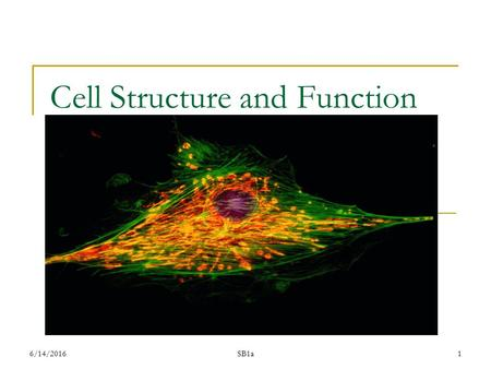 6/14/2016SB1a1 Cell Structure and Function. 6/14/2016 SB1a 2 Students will analyze the nature of the relationships between structures and functions in.