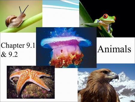 Chapter 9.1 & 9.2 Animals.