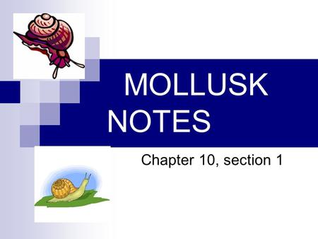 MOLLUSK NOTES Chapter 10, section 1. A. Characteristics of Mollusks 1. Body Structure a. Bilateral symmetry b. Digestive system with 2 openings.