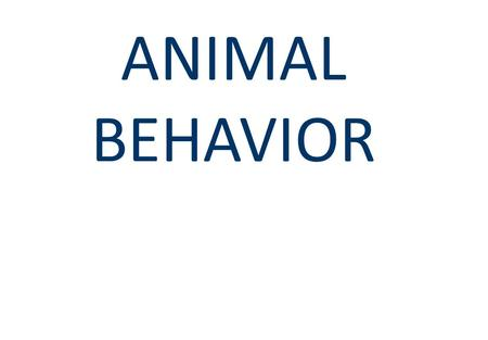 ANIMAL BEHAVIOR. Behavior  Behavior can occur in response to an internal or external stimulus.  Study of behavior and its relationship to evolutionary.