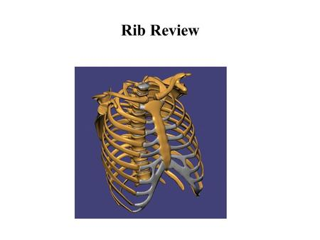 Rib Review. Objectives To review the basic function and anatomy of the typical and atypical ribs To review the manual diagnosis of somatic dysfunction.