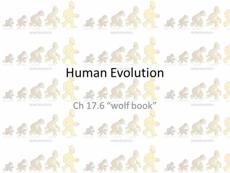 "Human Evolution Ch 17.6 ""wolf book"". Human evolution is NOT controversial amongst most scientists BUT disagreements on: how many species. Interpretations."