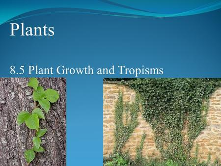 Plants 8.5 Plant Growth and Tropisms. POINT > Describe 3 types of tropisms POINT > Identify 2 important plant hormones POINT > Define dormancy POINT >