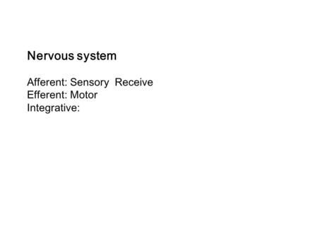 Nervous system Afferent: Sensory Receive Efferent: Motor Integrative: