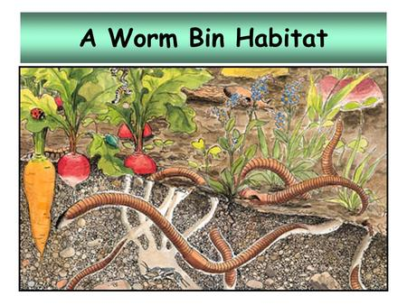"A Worm Bin Habitat. Vermicomposting The controlled decomposition of organic matter by aerobic microorganisms and concentrations of earthworms ""vermi"""