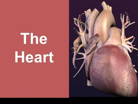 The Heart. June 17, 2016 Heart Anatomy June 17, 2016 ■ hollow muscular organ ■ surrounded by a double-layered protective sac called the pericardium Heart.