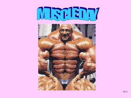10-1. 10-2 Muscular System Gross Anatomy Chapter 11.