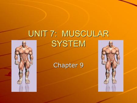 UNIT 7: MUSCULAR SYSTEM Chapter 9. GENERAL OVERVIEW: STRUCTURE –Hierarchy of skeletal muscles: muscle, fascicles, fibers, myofibrils, myofilaments –Coverings.