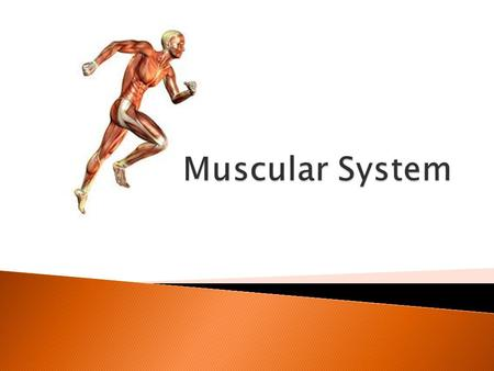  Movement (voluntary and involuntary)  Bodily functions  There are THREE types of muscle.