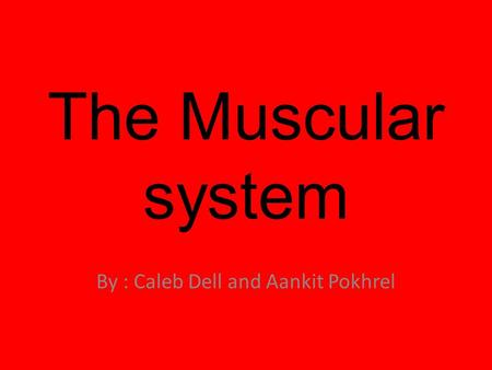 The Muscular system By : Caleb Dell and Aankit Pokhrel.