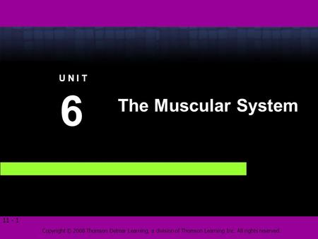 Copyright © 2008 Thomson Delmar Learning, a division of Thomson Learning Inc. All rights reserved. 11 - 1 The Muscular System 6 6 U N I T.