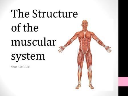 The Structure of the muscular system Year 10 GCSE.
