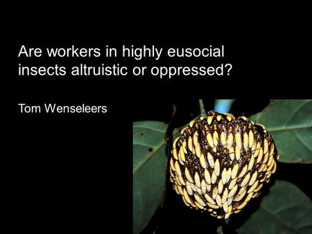 Are workers in highly eusocial insects altruistic or oppressed? Tom Wenseleers.