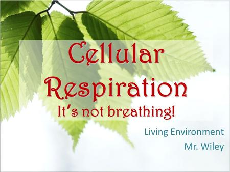 Cellular Respiration It's not breathing! Living Environment Mr. Wiley.