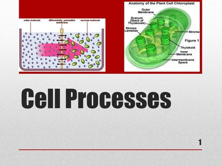 Cell Processes 1 1. Metabolism Cells obtain energy from their environment and then change it into a useable form It is the building up and breaking down.