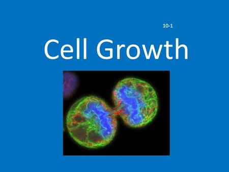 Cell Growth 10-1. Limits to Cell Growth Two reasons why cells divide: DNA Overload Exchanging Materials.