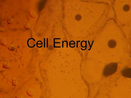 Cell Energy. From Sun to Cell Nearly all the energy that fuels life comes from the sun. The energy is captured by plants through photosynthesis. Photosynthesis.