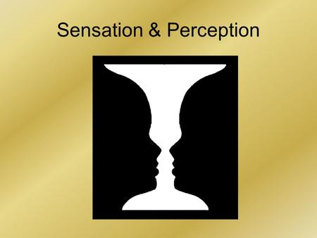 Sensation & Perception. An Introductory Activity Researchers have found that our experiences influence our perceptions Look at the following photographs.