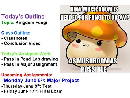 Today's Outline Topic: Kingdom Fungi Class Outline: - Classnotes - Conclusion Video Today's Assigned Work: - Pass in Pond Lab drawing - Pass in Major assignment.