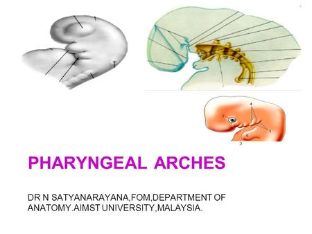 Pharyngeal arches DR N SATYANARAYANA,FOM,DEPARTMENT OF ANATOMY.AIMST UNIVERSITY,MALAYSIA.