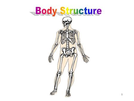 1 Body Structure 2 Objectives After studying this chapter, you will be able to: Define the elements of human body structure Describe the planes of the.